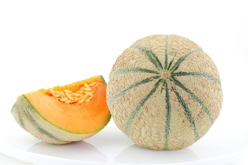 Tranches de melon frais