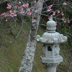 A la découverte du haïku pour célébrer le printemps + un concours !