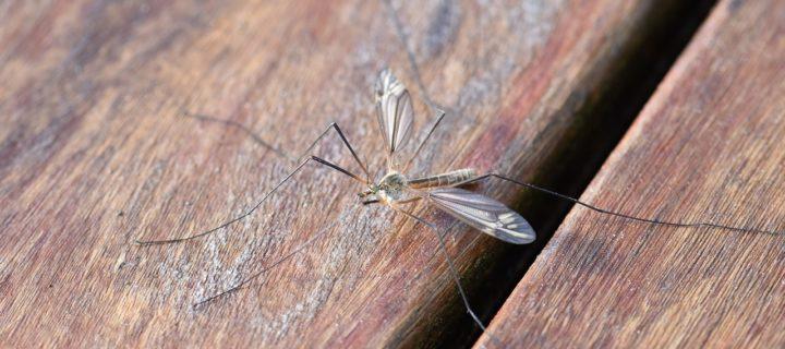 Repousser les moustiques au naturel – mes recettes vraiment efficaces