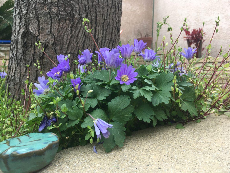 Les coups d'oeil du mois - Mars 2018 (sur une photo de fleurs violettes)