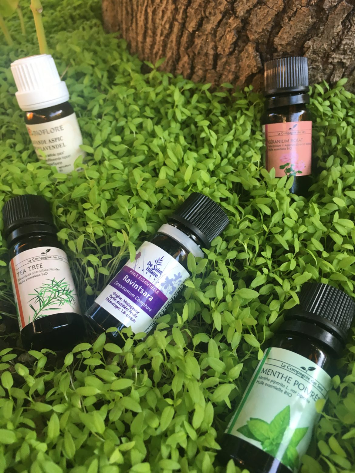 Flacons d'huiles essentielles dans de la verdure