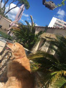 Ma chienne Elba avec mes deux palmiers et un beau morceau de ciel bleu