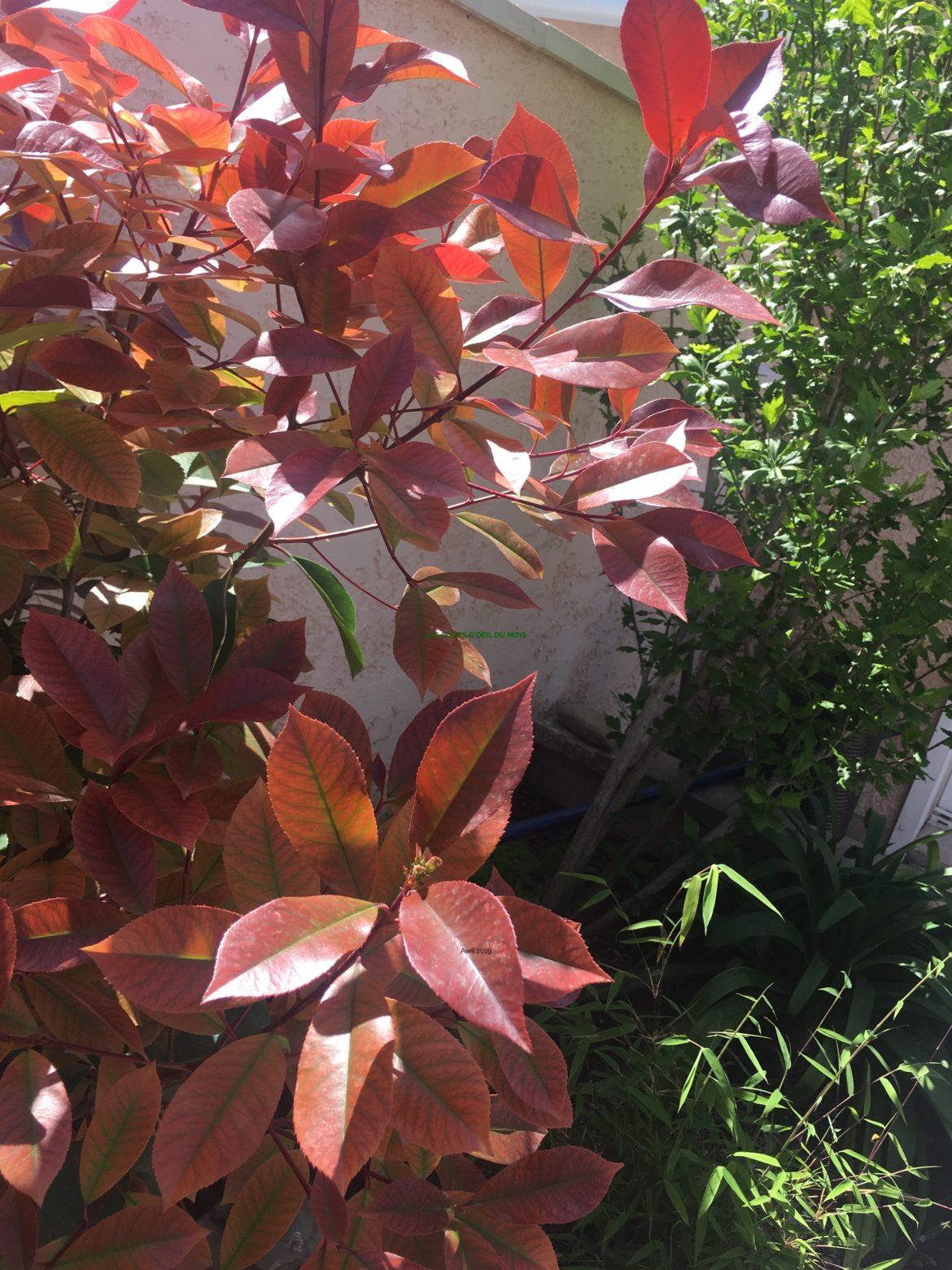 Les coups d'oeil du mois - Avril 2019 : jardin au printemps