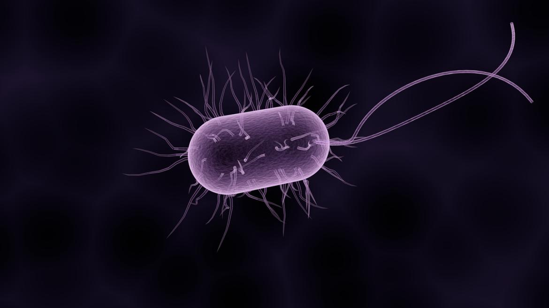 Gros plan d'une bactérie
